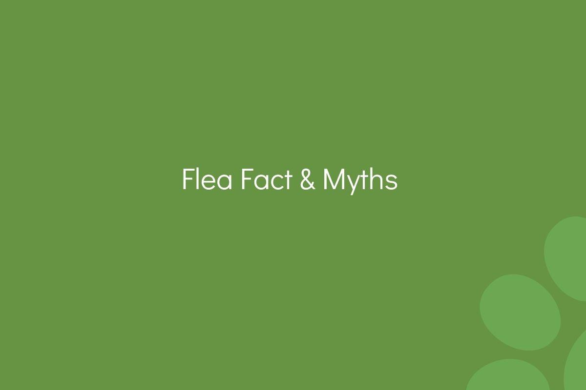 Flea-Fact--Myths-