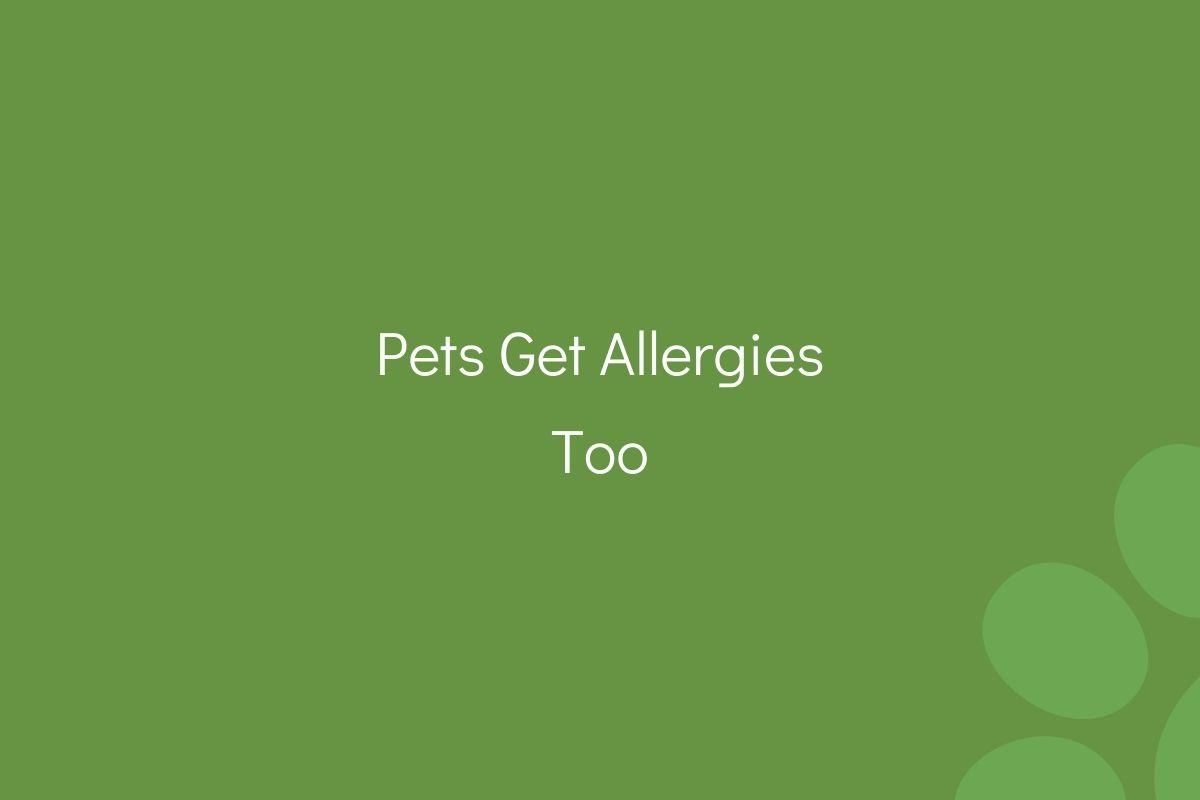 Pets-Get-Allergies-Too