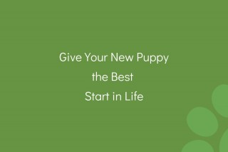 Give-Your-New-Puppy-the-Best-Start-in-Life-