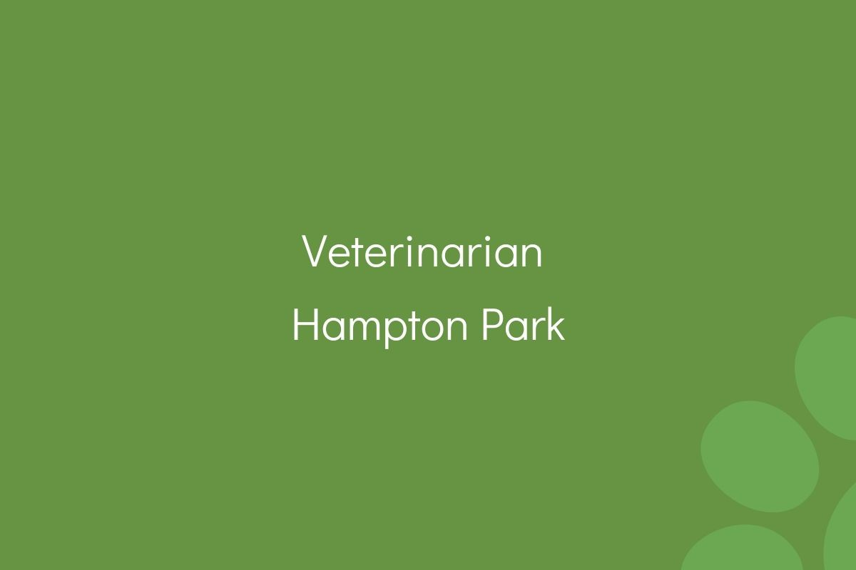 Veterinarian-Hampton-Park