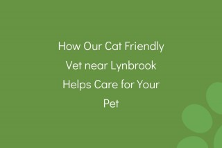 How-Our-Cat-Friendly-Vet-near-Lynbrook-Helps-Care-for-Your-Pet