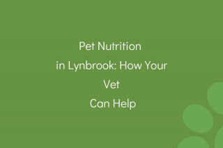Pet-Nutrition-in-Lynbrook_-How-Your-Vet-Can-Help