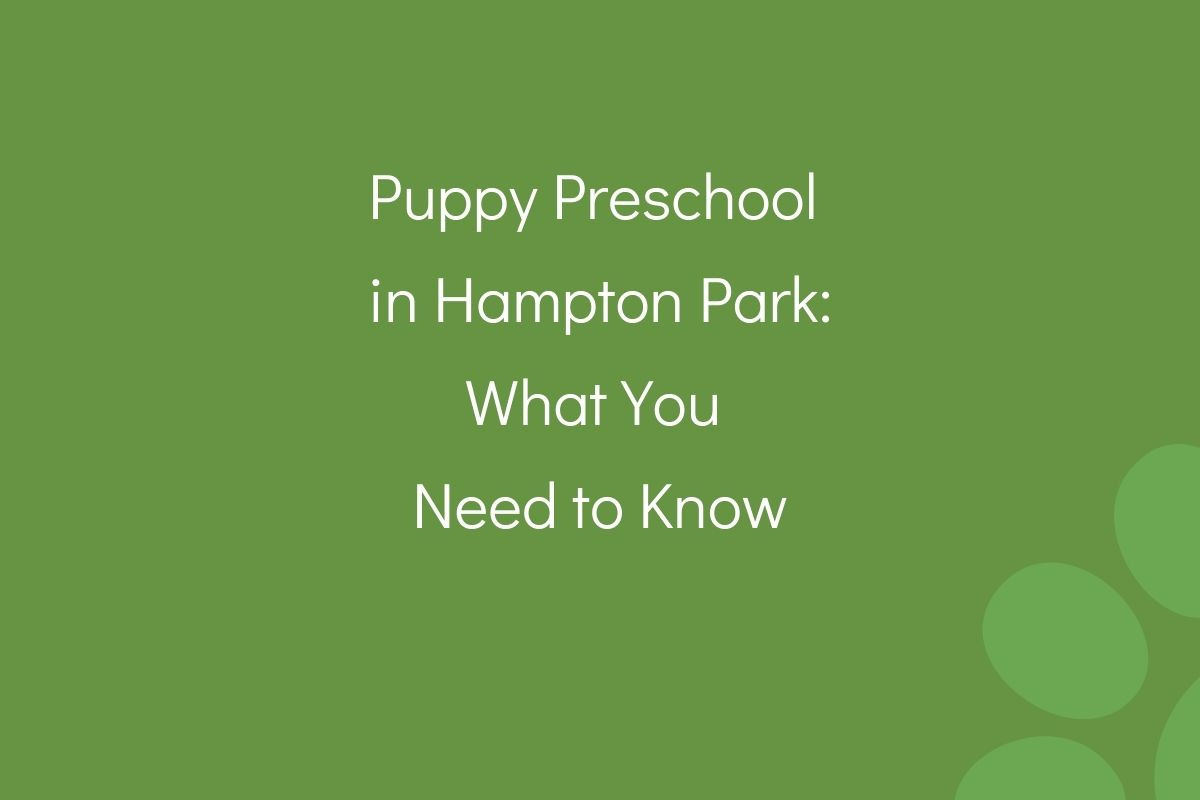 Puppy-Preschool-in-Hampton-Park-What-You-Need-to-Know