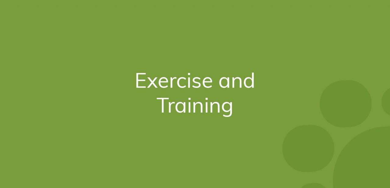 ExercisenadTraining